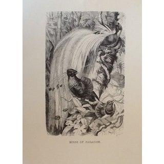 Antique Kretschmer Book Plate Engraving