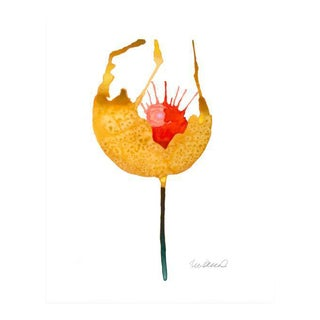 Premium giclee print of botanical yellow poppie