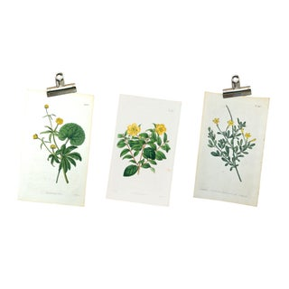 Antique Original 1800s Botanical Prints - Set of 3