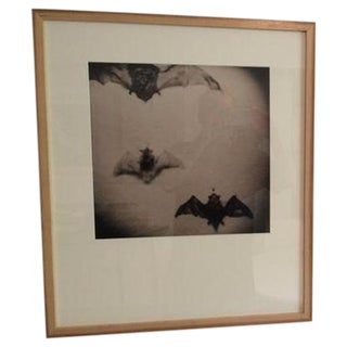 "Jason Thrasher ""Holga Bats"" Photograph"