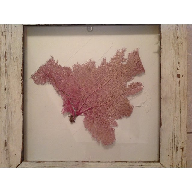 Image of Coral in Shadow Box Wall Art