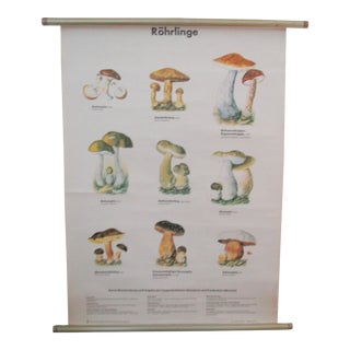 Vintage German School Science Mushrooms Chart