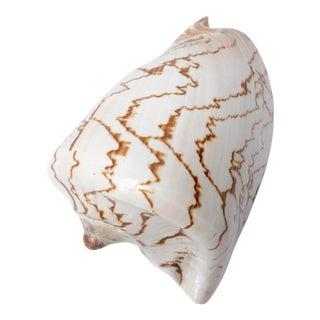 Natural Display Shell