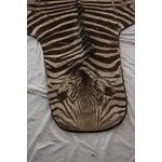 """Image of Vintage Zebra Hide Rug - 9'9"""" x 6'2"""""""
