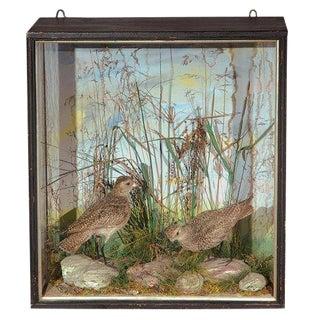 Taxidermy Bird Display