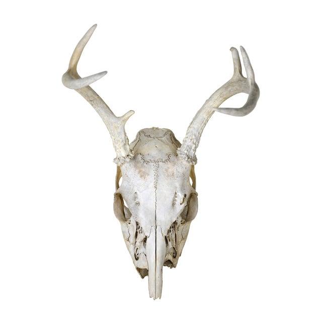 Image of Weathered Deer Antlers III