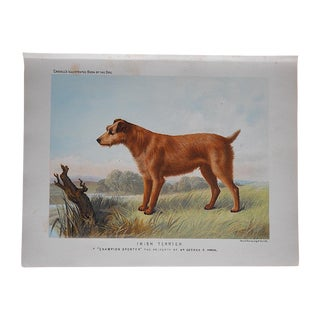 Antique Dog Irish Terrier Lithograph