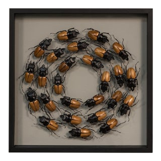 Sarreid Ltd Framed Brown & Black Beetles