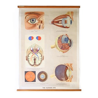 Vintage English Human Eye Diagram