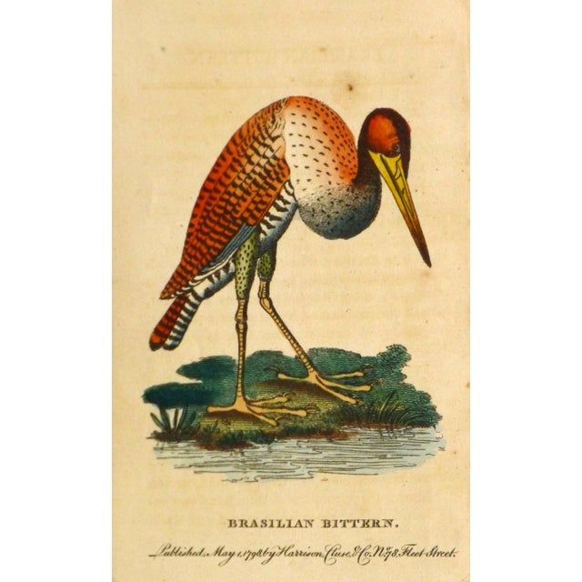 Image of Antique Bird Print Engraving, Bittern, 1798