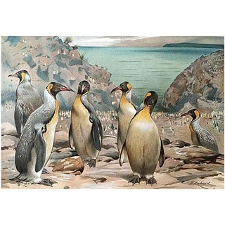 """Giant Penguins"" Antique Lithograph by W. Kuhnert"