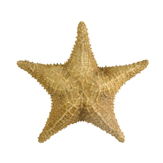 Vintage Nautical Starfish - Image 1 of 4