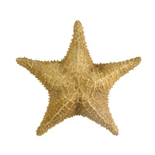 Vintage Nautical Starfish