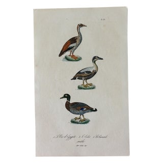 French Hand Painted Duck Engraving