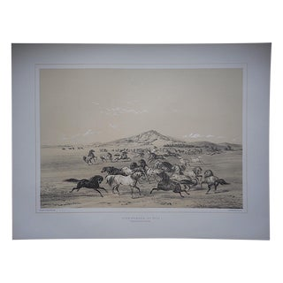 Wild Horses Limited Edition Print, George Catlin