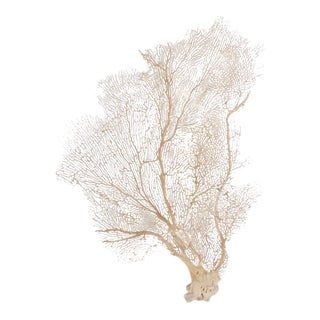 Sea Fans with Organic Texture and Sculptural Form, Priced Individually
