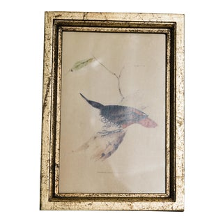 Natural History Print of Bird