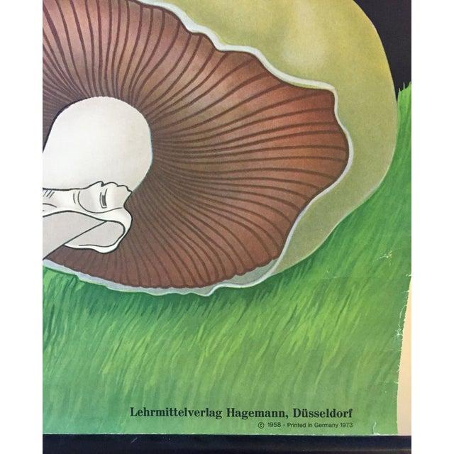 1973 Jung-Koch-Quentell Mushroom School Wall Chart - Image 6 of 8