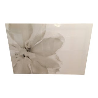 White Flower Acrylic Framed Photograph