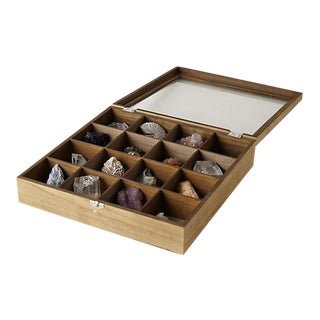 Curio Collector's Box With Fossils