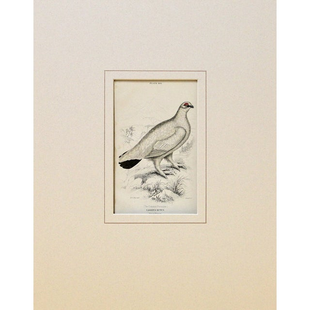 Common Ptarmigan Engraving - Image 2 of 2