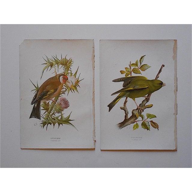 Image of Antique Bird Lithographs - Pair