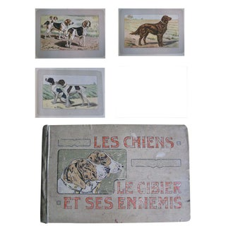 1907 French Book Filled With 180 Photogravure Prints of Dogs and Other Animals