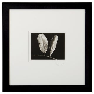 Platinum Print - Two Leaves by Ryuijie