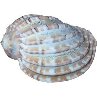 Decorative Sea Shell