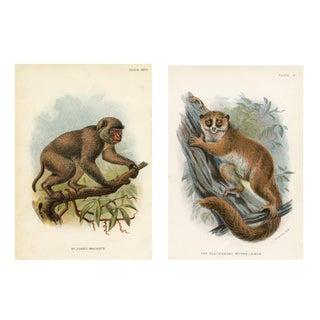 1898 Chromolithograph Monkey Prints - A Pair