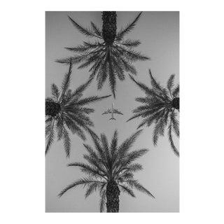Jason Mageau Palm Springs Plane & Palm Trees Photo