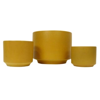 Gainey Ceramics Mustard Yellow Planters - Set of 3
