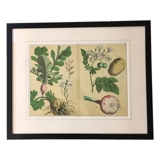 English 1890 Vegetables Lithograph