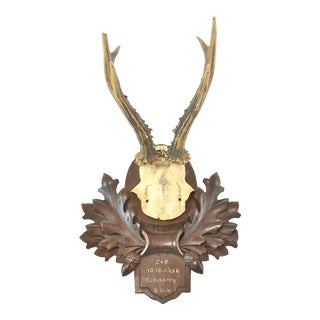 German Mounted Roe Buck Antlers, 1930s