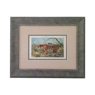 Antique Lithograph of Tigers, 1894