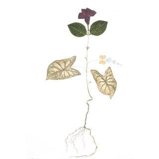 Mandeville Oak watercolor, fabric, pressed foliage on paper by Marilla Palmer