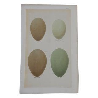 19th C. Egg Print Plate 9