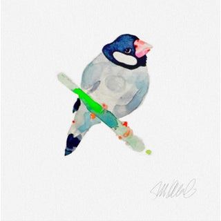 Premium giclee print of Finch.