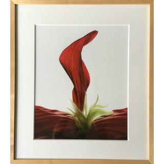 Framed Digital Abstract Photograph