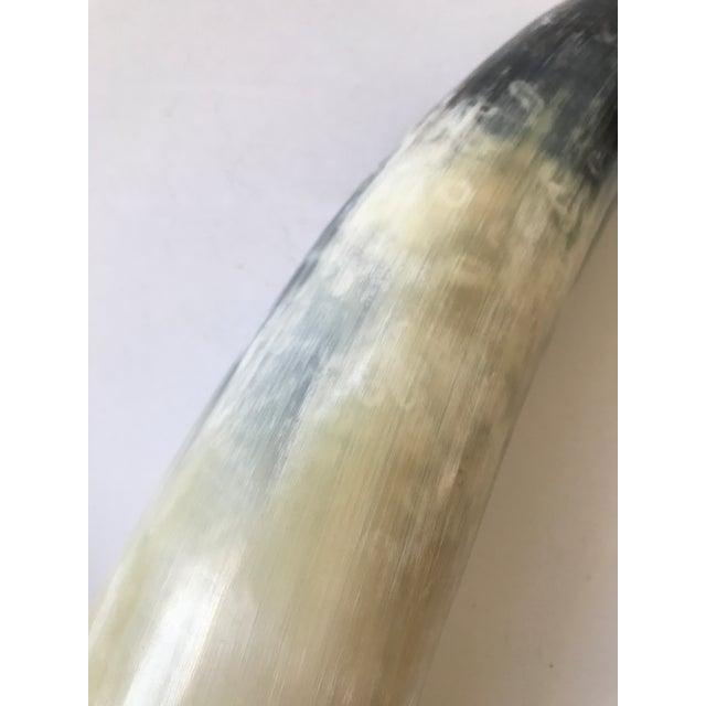 Decorative Polished Horn - Image 7 of 8
