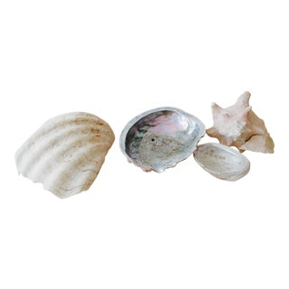 Coastal Collection Sea Shells - Set of 4