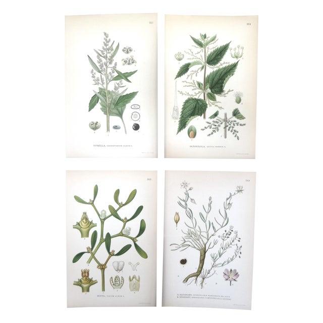 1922 Vintage Swedish Floral Prints - Set of 4 - Image 1 of 6