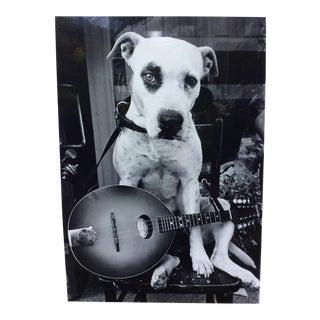 Dog Playing Banjo Photo Stamped Linda Smogor