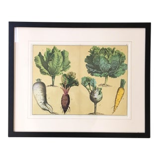 English 1890 Root Vegetables Lithograph