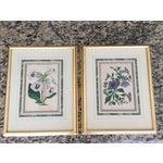 Image of 1800's Joseph Paxton Botanical Prints - a Pair