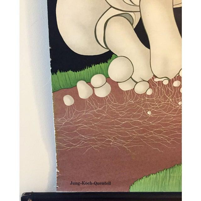 1973 Jung-Koch-Quentell Mushroom School Wall Chart - Image 7 of 8