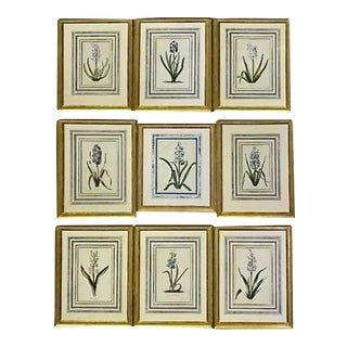 Framed 18th Century German Botanicals- Hyacinths From the Hortus Nitidissimis - Set of 9