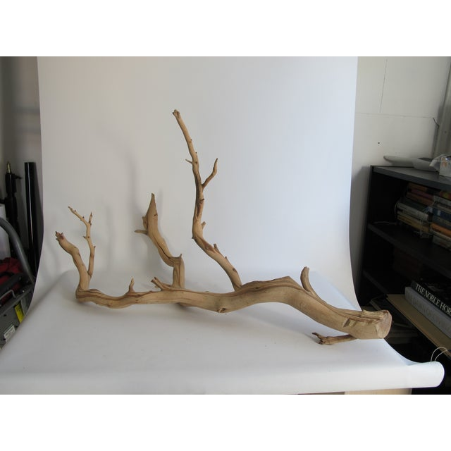 Preserved Driftwood Branch - Image 2 of 5