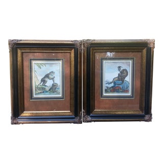 Mangabey a Collier Blanc Art Prints - A Pair