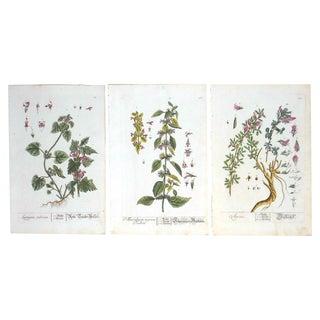 18th C. Botanical Prints Folio Size- Set of 3